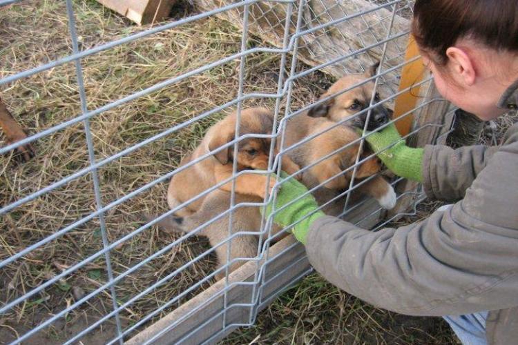 Câinii abandonaţi din Cluj, lăsaţi la mila oamenilor