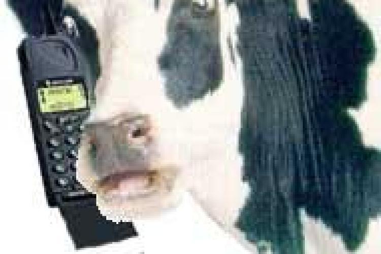 """""""Mi-am pierdut telefonul în VACĂ"""", top 10 cele mai BIZARE cereri de înlocuire a telefonului"""