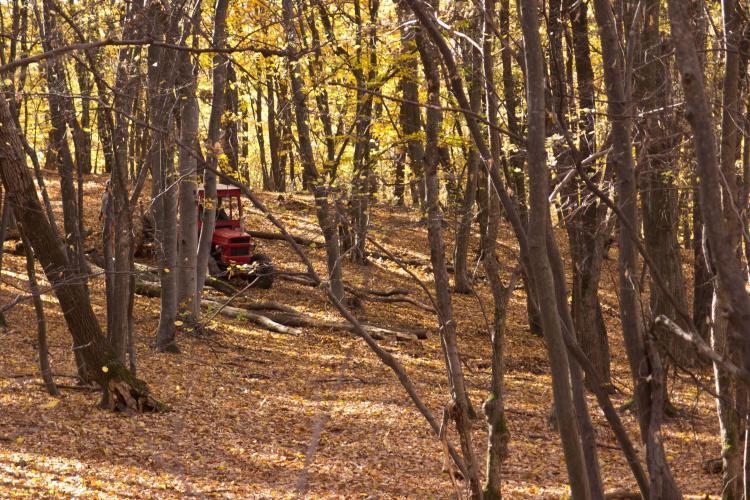 Defrișare în Pădurea Făget - FOTO