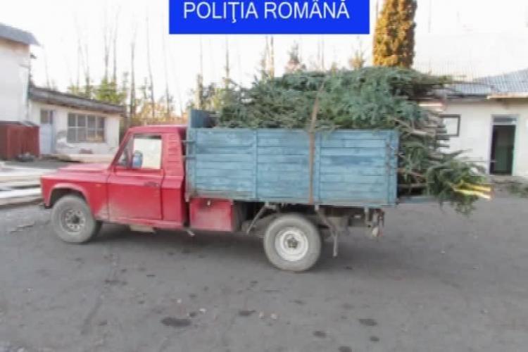 420 pomi de Crăciun tăiați ilegal și confiscați de poliţiştii din Cluj. Autorii au scăpat cu amendă - VIDEO