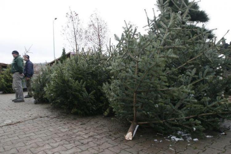 CLUJ: Amplasamentele aprobate pentru comercializarea brazilor de Crăciun