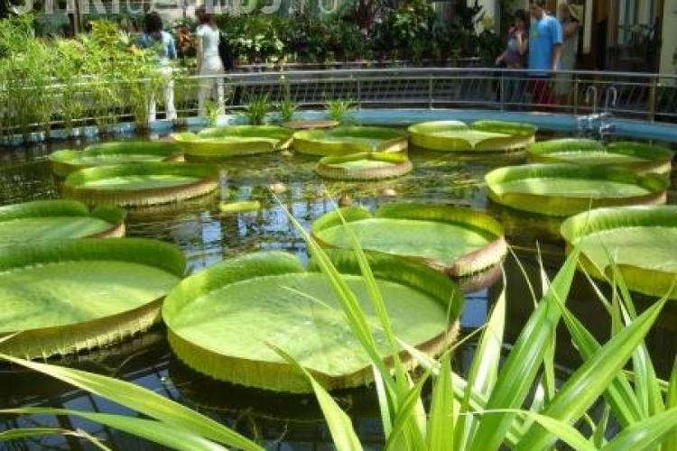 Serele Grădinii Botanice, închise câte o zi în fiecare lună din anul 2013