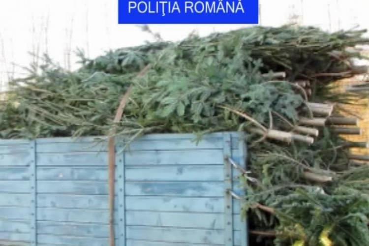 Peste 1000 de brazi de Crăciun, confiscați în Cluj