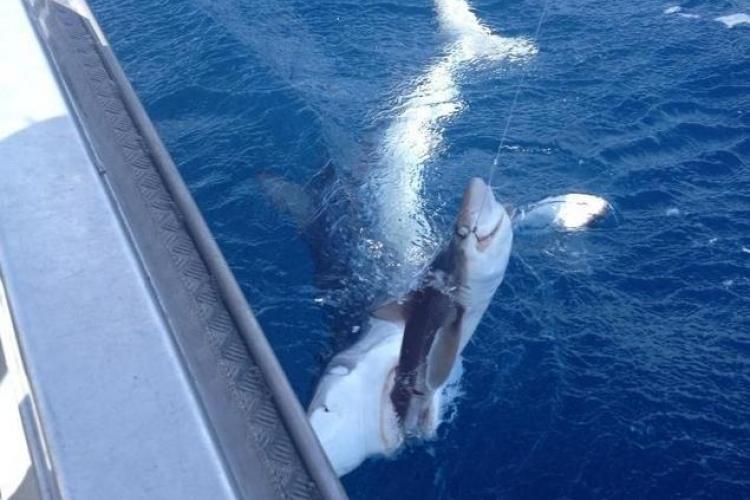 Foto INCREDIBIL! Ce moment uimitor a surprins un pescar