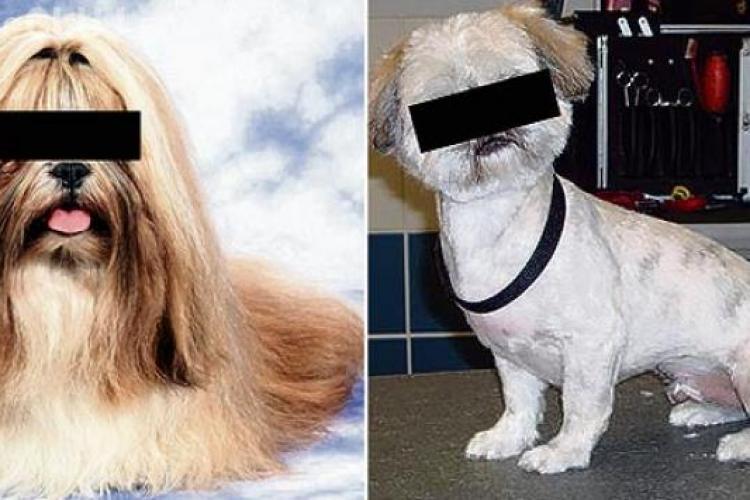 """Fostul iubit s-a răzbunat """"crud"""" pe câinele ei pentru că a fost mințit"""