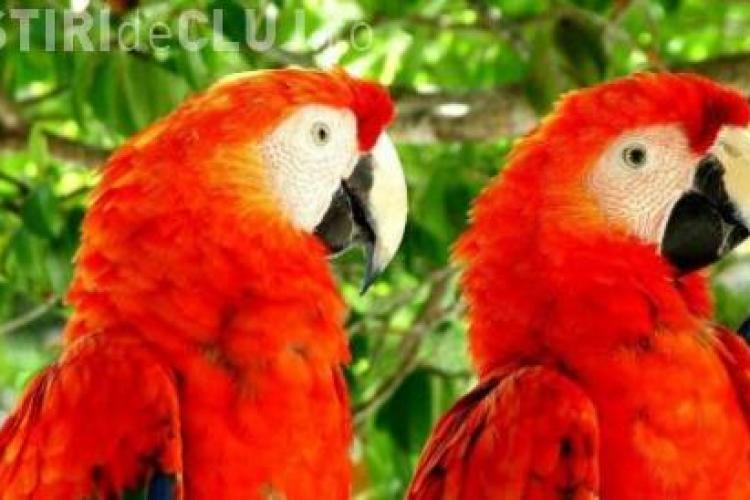 CLIPUL ZILEI: Papagalii care danseaza pe hip-hop VIDEO