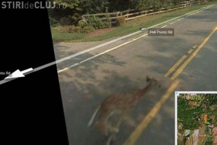 Top 10 - imagini NEBUNE surprinse de mașinile GOOGLE MAPS - FOTO