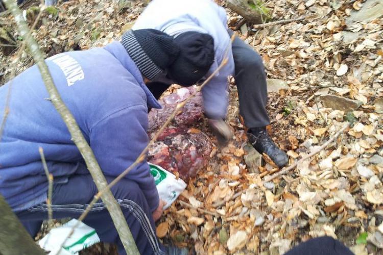 INCOMPETENȚĂ? Autoritățile nu știu NIMIC despre cele 1.000 de kg de carne din lacul Tarnița - VIDEO și FOTO