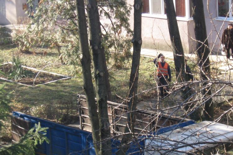 Se taie arborii tineri de pe strada Băița, din Gheorgheni - FOTO