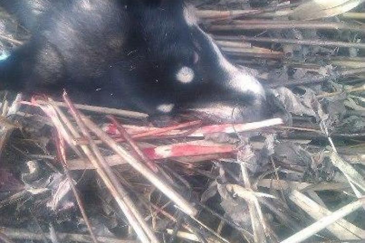 Câini împușcați de vânători, în Cluj-Napoca, sub ochii unei fetițe de 4 ani - FOTO ȘOCANT