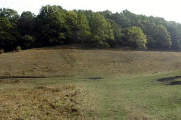 Primăria Cluj-Napoca pierde Pădurea Hoia în instanță. Terenul are 20 de hectare