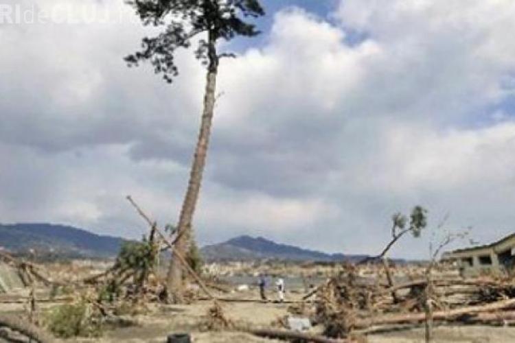 Japonezii au transformat în statuie un copac care a rezistat unui TSUNAMI