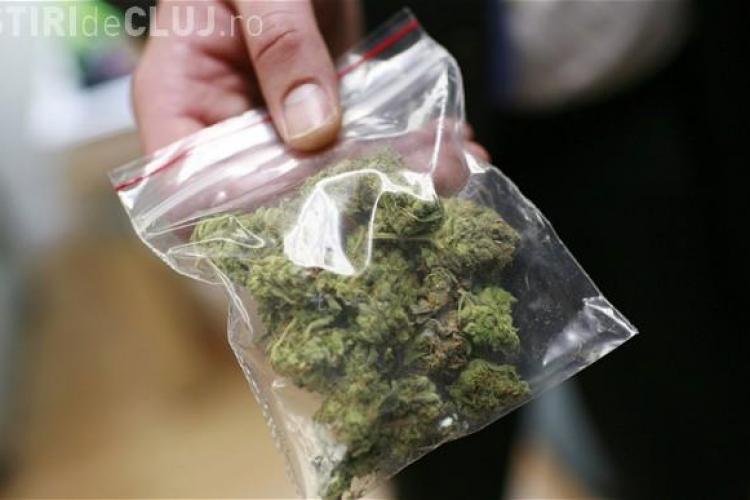 Percheziţii la Cluj-Napoca și Sibiu. Traficanții de cannabis aduceau droguri din Spania și Germania și foloseau minori