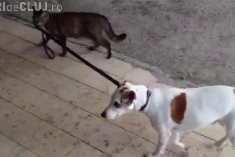 CLIPUL ZILEI: Câinele plimbat de pisică VIDEO