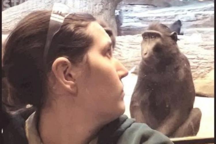 IMAGINEA ZILEI: Vezi cum i-a stricat o maimuță poza unei femei FOTO