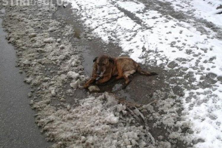 Câine lovit de mașină, aruncat de angajații Primăriei Dej la gunoi, deși era în viață - VIDEO IMAGINI ȘOCANTE