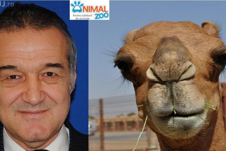 Ce asemănări sunt între vedete și animale - FOTO amuzante