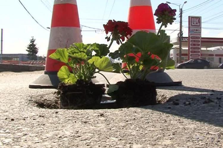 Liberalii au plantat flori în gropile din Cluj-Napoca, de pe strada Fabricii - FOTO