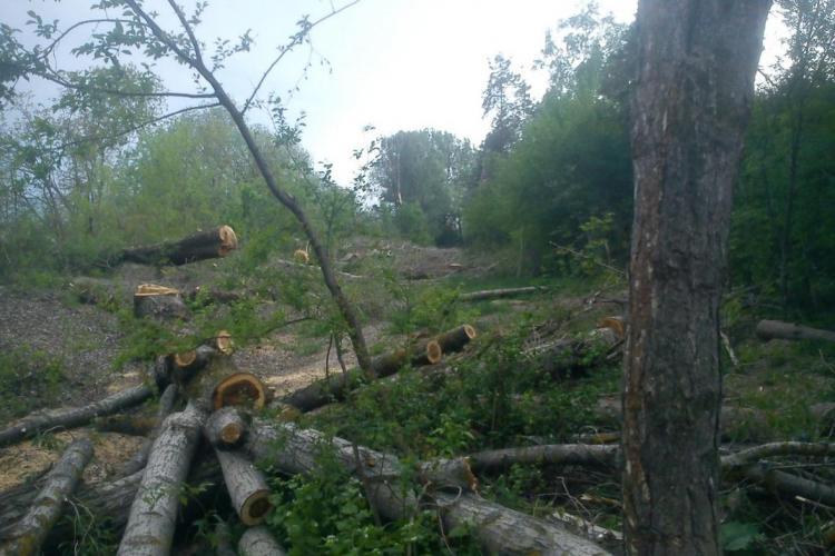"""Armata construiește vile în Cartodom și a primit un aviz special pentru defrișări """"fără număr"""" de la Agenția de Mediu Cluj"""