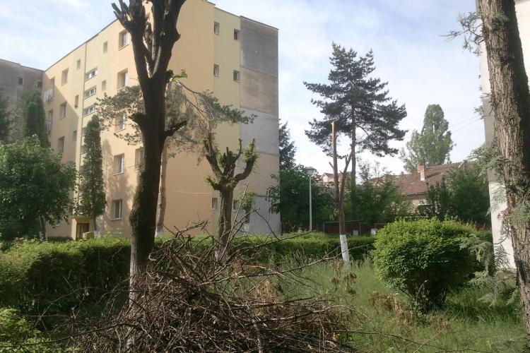 Clujenii de pe Lăcrămioarelor s-au apucat să-și taie copacii și au fost amendați - FOTO