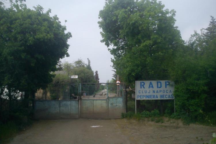 Defrișări la cartodromul din Gheorgheni, unde Primăria Cluj-Napoca amenajează un parc - FOTO