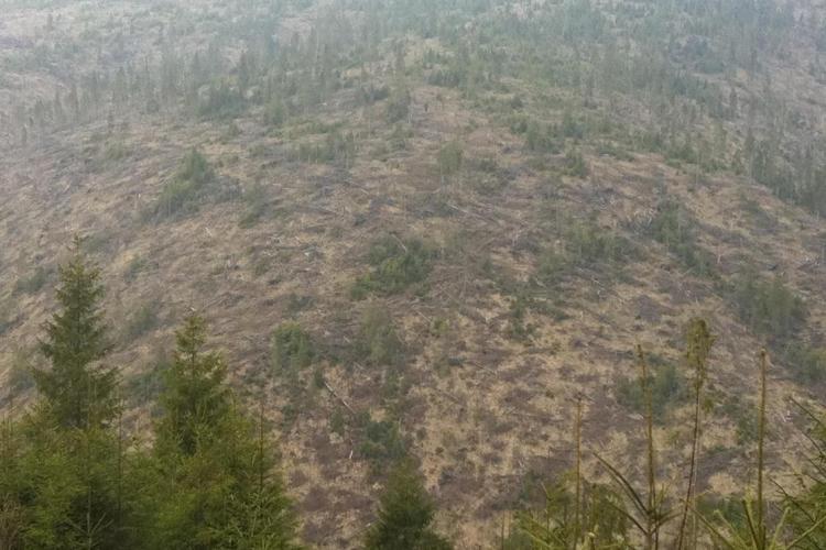 Blestemul pădurilor! Un pădurar, acuzat că a defrișat pe rupte și a construit 135 de apartamente, a murit în pădure