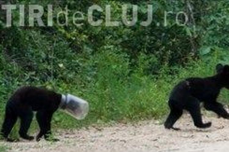 Un pui de urs a stat zece zile cu capul intr-un borcan de plastic