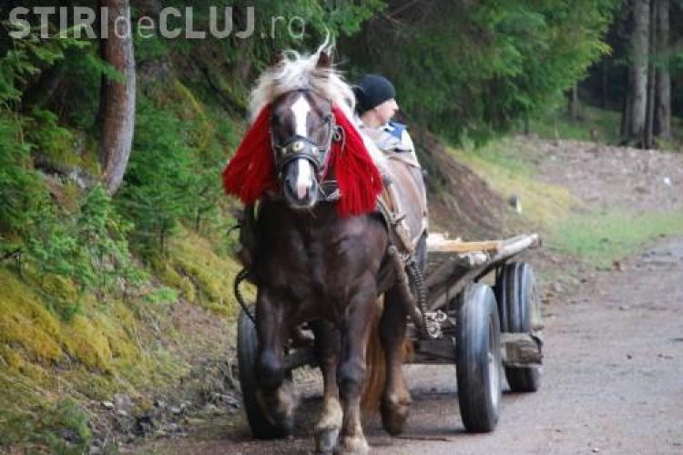 Un cal a lovit mortal o femeie in varsta de 78 de ani din Suatu, judetul Cluj