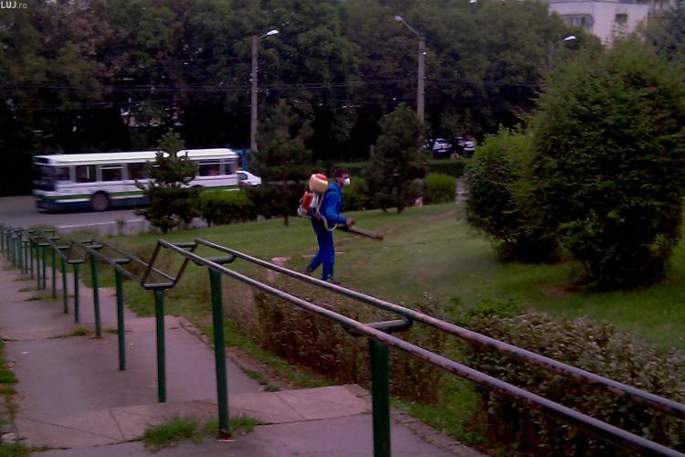 Cluj: A treia etapă de dezinsecţie pe domeniul public