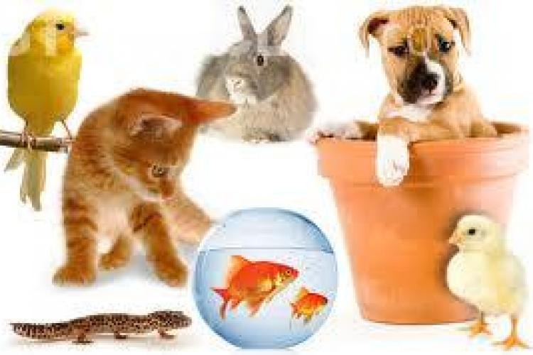 Top 7 motive pentru a-ți lua un animal de companie