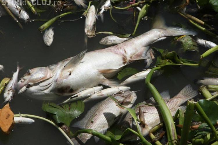 Sute de pești morți în lacul de la Chiteni. Suspiciuni de MÂNĂ CRIMINALĂ