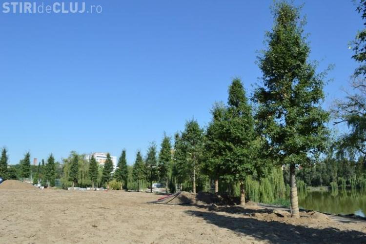 240 de camioane cu arbori, sol vegetal special au ajuns la Cluj pentru amenjarea parcului de lângă Iulius Mall - FOTO