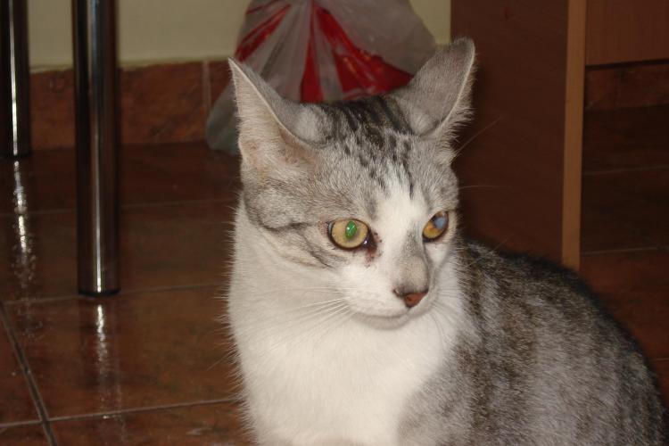 O clujeanca ofera 1000 de lei pentru gasirea pisicii pierdute - FOTO