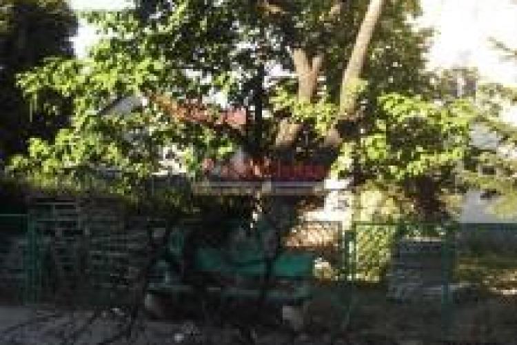 O femeie din Mănăștur a ajuns la spital după ce a căzut pe ea creanga unui copac