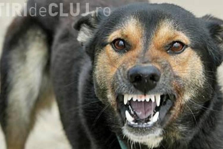 Maidanezii sunt aduși din comune și abandonați în Cluj-Napoca. Câți câini au fost capturați în 2013?