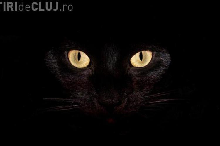 O pisică neagră a creat PANICĂ între romi la priveghiul regelui Cioabă