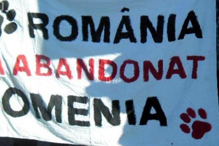 Protest împotriva eutanasierii maidanezilor la Cluj, în Piața Unirii