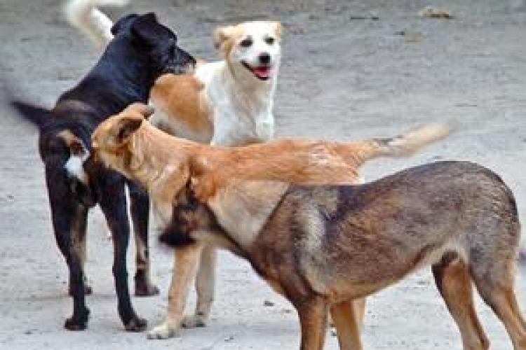 Deputații au VOTAT pentru eutanasierea câinilor fără stăpân