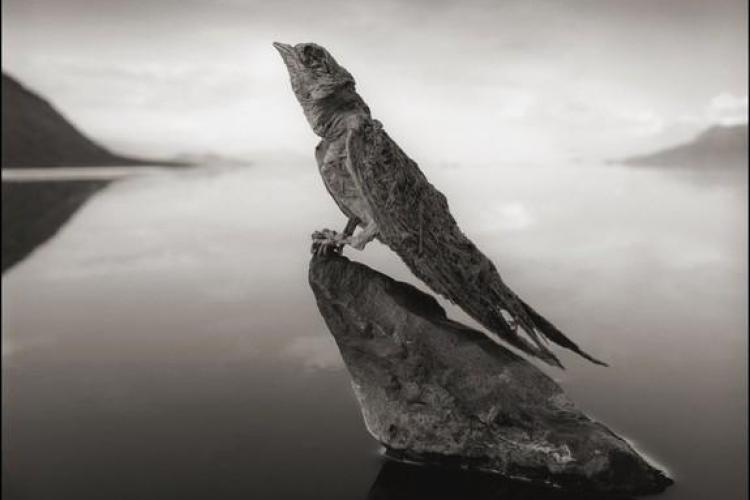 Misterul lacului care transformă orice vietate în stană de piatră - FOTO