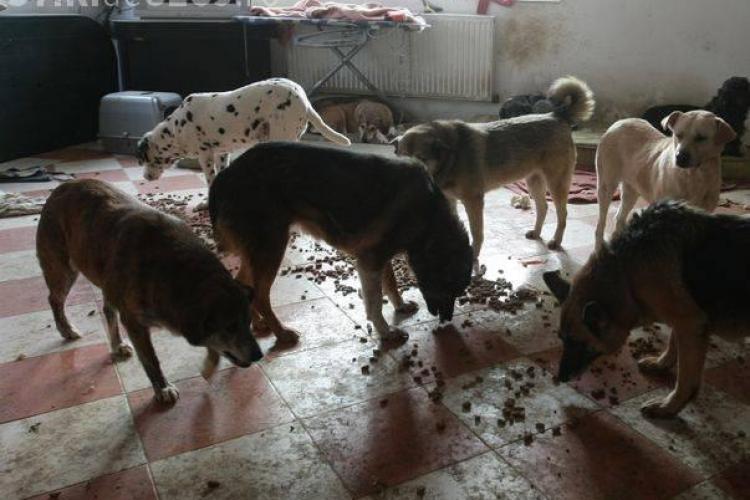 O clujeancă crește 8 câini într-un apartament și îi terorizează pe vecini. NIMENI nu poate lua măsuri