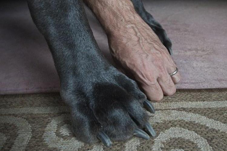 Cel mai înalt câine din lume a murit. Era mai înalt decât un baschetbalist FOTO
