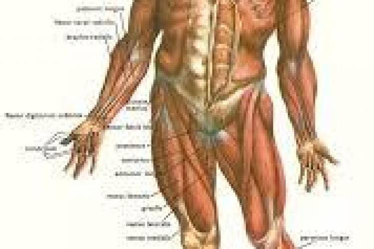 Top 10 mituri despre corpul tău pe care ești tentat să le crezi