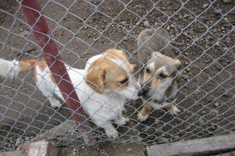 Adapostul de câini al Primăriei Cluj-Napoca, extins cu SCANDAL. 450.000 de lei costă încă 60 de locuri