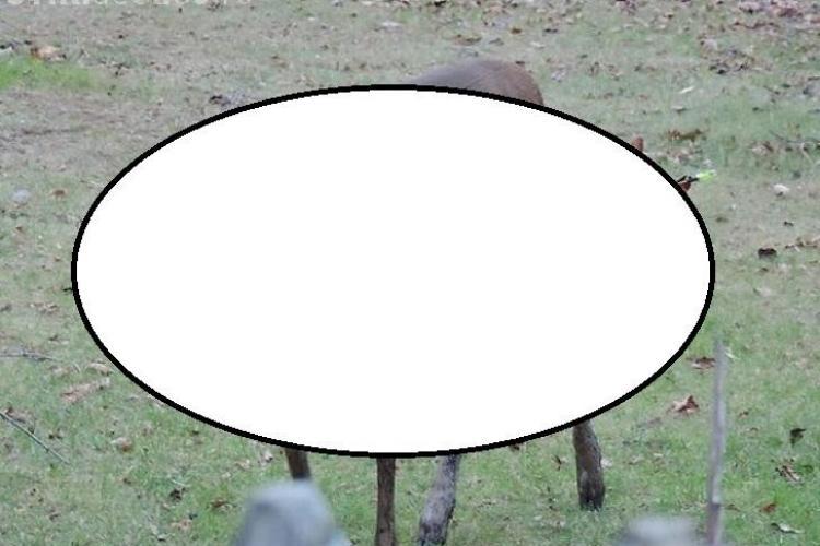 O căprioară a REZISTAT NOUĂ ZILE cu o săgeată în cap - FOTO ȘOCANTE
