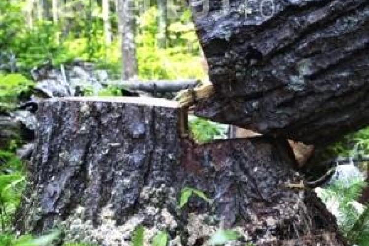 Moarte tragică pentru un tânăr clujean. A fost ucis de copacul pe care îl tăia