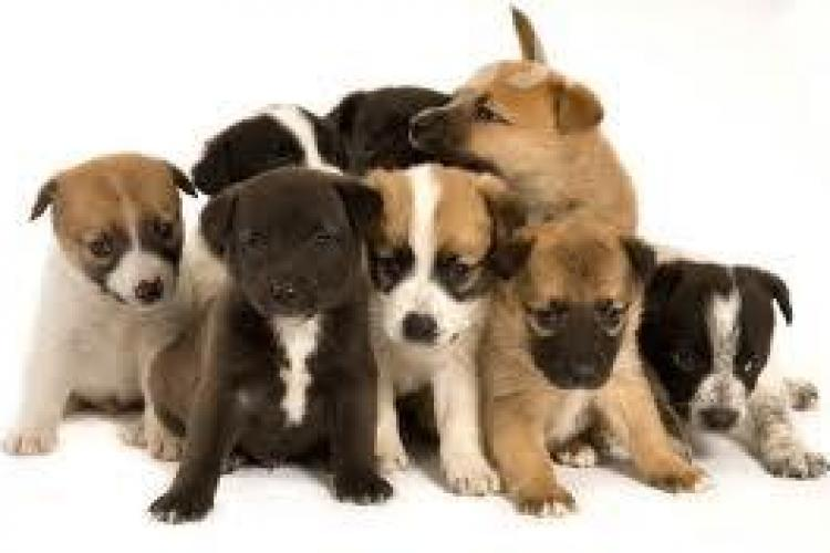 """""""Keep Calm With Dogs"""", programul prin care studenții clujeni vor putea scăpa de stresul sesiunii"""