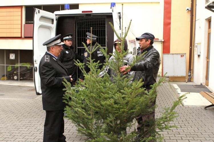 Brazii de Crăciun, vânduți la Cluj-Napoca de oricine are un topor acasă - FOTO
