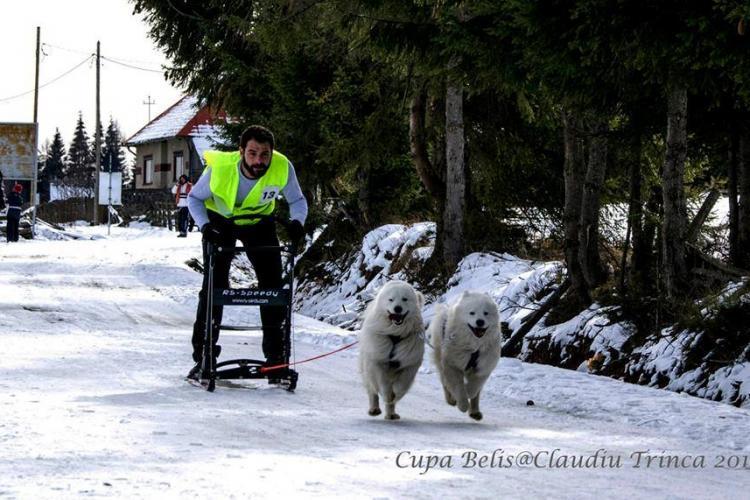 Cele mai frumoase imagini de la Cupa Beliș de sănii trase de câini - FOTO