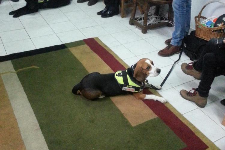 Terapie anti-stres cu câini pentru studenţii din Cluj. Faceţi cunoştinţă cu Bes, Bailey şi Dersou - FOTO