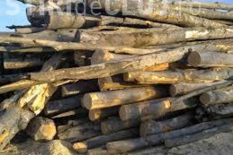 Polițiștii au ieșit la confiscat lemne furate. Cinci clujeni au fost prinși într-o zi